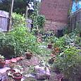 Untamed Garden
