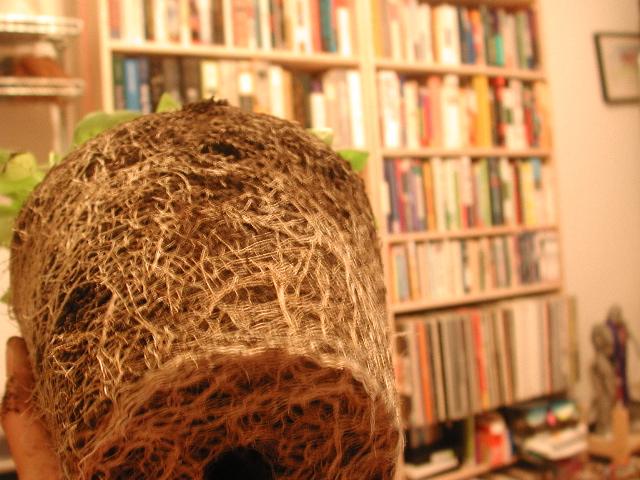 Basil Roots