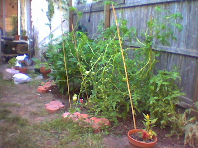 Trimmed Tomatoes